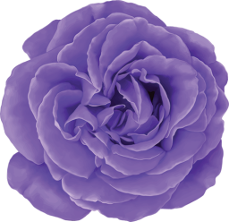 Purple Social Rose